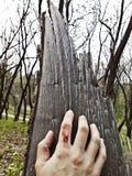 Main d'un zombi contre le contexte d'un arbre, fond à Halloween photographie stock libre de droits