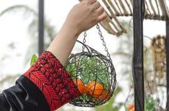 Main d'une femme dans un hoodie Arabe avec un panier des oranges Images libres de droits