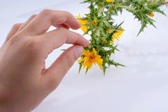 Main dans le contact avec fleurs photo stock