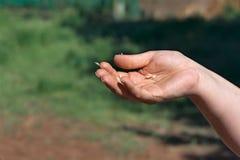 Main dans le vent Photo libre de droits