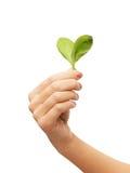 Main de femme avec les feuilles vertes Photos stock