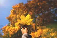 Main de femme montrant la feuille colorée sur Autumn Backround image stock