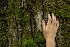 Main de femme sur l'écorce d'arbre, concept de protection d'écosystème, l'espace images stock