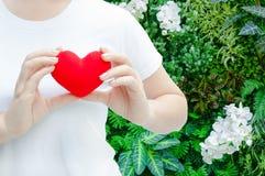 Main de femme tenant la peluche un coeur rouge à la gauche son coffre, concept de Saint Valentin Photos libres de droits