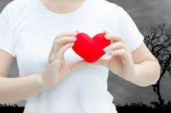 Main de femme tenant la peluche un coeur rouge à la gauche son coffre sur le fond d'obscurité de nature Image stock