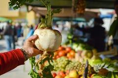 Main de femme tenant le rutabaga ou le navet au marché d'agriculteurs de rue Images stock