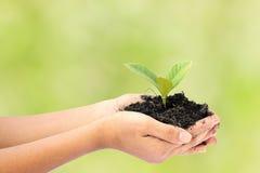 Main de femme tenant une petite usine verte d'arbre Photographie stock libre de droits
