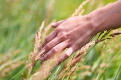 Main de fille frottant des épillets dans le domaine Le concept de la liberté et unité avec la nature Images stock