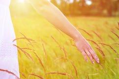 Main de fille frottant des épillets dans le domaine Le concept de la liberté et unité avec la nature Photographie stock