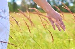 Main de fille frottant les usines sauvages Le concept de l'unité avec la nature, pureté de la vie Images stock