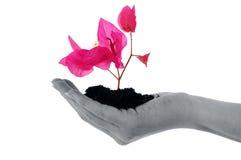 main de fleurs Photographie stock libre de droits