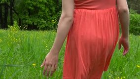 Main de jeune femme fonctionnant par le champ sauvage vert de pré, touchant le plan rapproché de fleurs sauvages Tir d'enregistre banque de vidéos