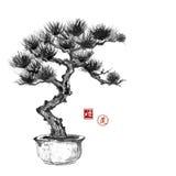 Main de pin de bonsaïs tirée par la main avec l'encre Image libre de droits