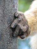 Main de singe - détail Photographie stock libre de droits