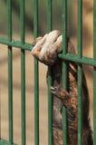 Main de singe tenant le gril de cage Photos stock