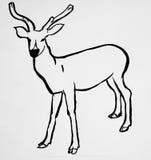 main dessinée par cerfs communs animaux Photos stock