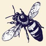 Main-dessin d'abeille, croquis d'insecte Illustration Libre de Droits