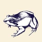 Main-dessin de grenouille, croquis Illustration Stock