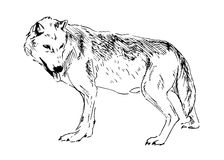 Main dessinant un loup Image stock
