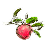 Main dessinant une pomme Images stock
