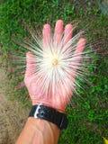 Main du ` s d'homme et fleur exotique images stock