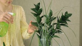 Main du ` s de femme pulvérisant la plante verte banque de vidéos