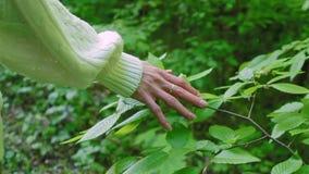 Main du ` s de femme touchant des feuilles dans la forêt, mouvement lent banque de vidéos