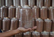 Main du sac de prise des champignons cultivés à la ferme. Photo stock