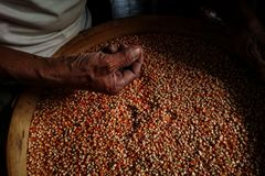 Main en graine de maïs, bas éclairage photographie stock libre de droits
