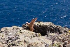 Main entre les roches Photos libres de droits