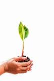 Main et arbres sur un fond blanc Photo libre de droits