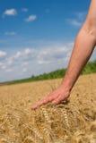Main et blé Images libres de droits