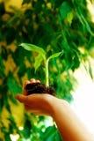 Main et centrale Concept d'environnement Fond de tache floue Photos stock