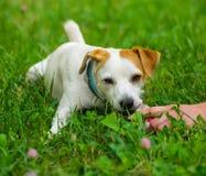 Main et chien Images stock
