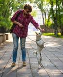 Main et chien Photographie stock libre de droits