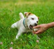 Main et chien Image libre de droits