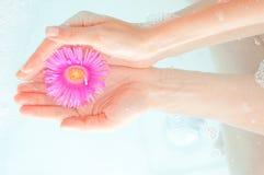 Main et fleur femelles photo stock
