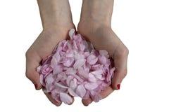 Main et fleurs photographie stock