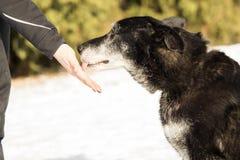 Main et tête humaines de chien Photographie stock