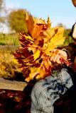 Main et un bouquet des feuilles d'érable Images stock