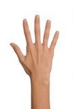 Main femelle d'isolement de femme ouverte vide en position du numéro cinq sur un fond blanc Photo libre de droits