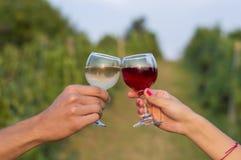 Main femelle et masculine faisant tinter les verres dans le vignoble tandis que dri Image libre de droits
