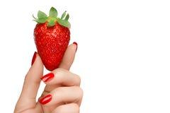 Main femelle jugeant une fraise mûre succulente d'isolement sur le blanc Consommation propre Image stock