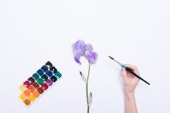 Main femelle tenant une brosse pour dessiner avec des aquarelles Photo libre de droits