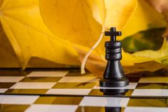 Main figure on a chessboard against the background of autumn leaves Royalty Free Stock Photography