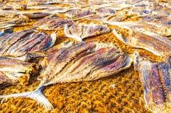 The main fishermen`s food Stock Photography