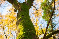 The main focus is on trees in different situations royalty free stock photography