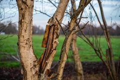 The main focus is on trees in different situations royalty free stock photos
