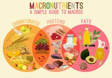 Main Food Groupd. Main food groups - macronutrients. Carbohydrates, fats and proteins in comparison. Dieting, healthcare and eutrophy concept. Vector royalty free illustration
