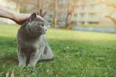 Main frottant le chat de shorthair extérieur Avec l'espace de copie Images libres de droits
